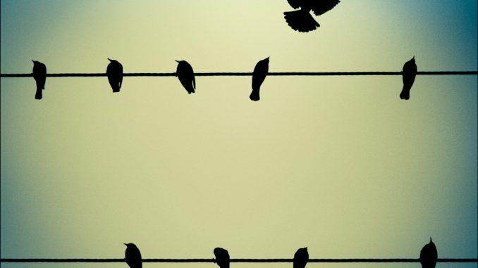 Bird on wire breaking free